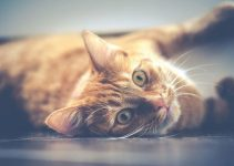 8 Reasons Why Kittens Make Great Pets