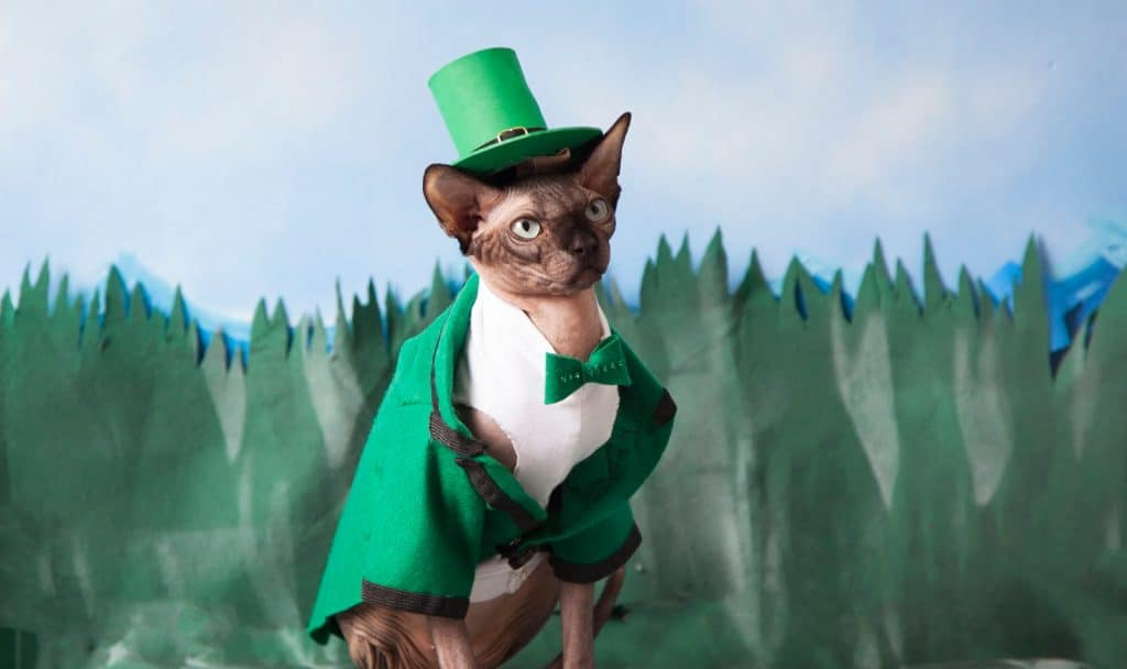 Looking for some incredible Irish cat names for your sweet lad or lass? We've got 100 of them just for you! Check them out!
