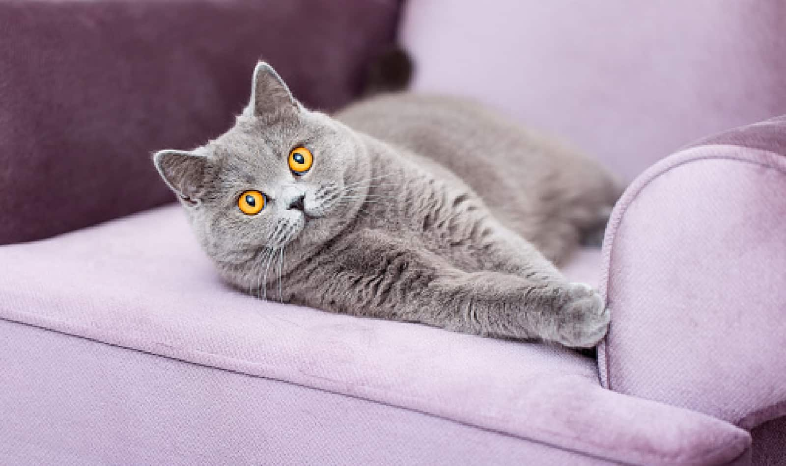 Looking for the most beautiful Russian cat names? Check out our list! We came up with 100 amazing ideas, split between boys & girls.
