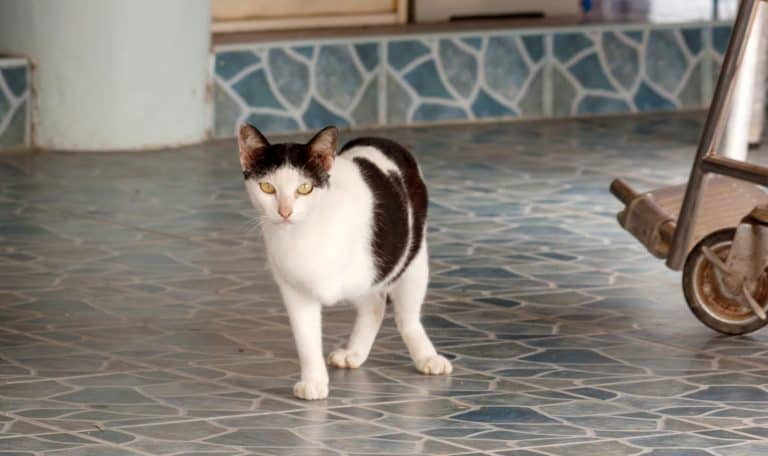 These 100 sweet and meaningful 3-legged cat names really say