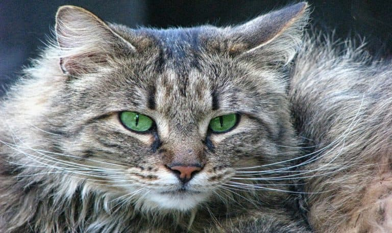 ideas for green-eyed cat names