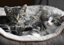 Hawaiian Pet Names For Cats: 100 Suggestions for Males & Females
