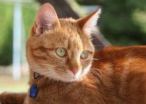 Why Do Cat Collars Have Bells? [Type of Collars & More]